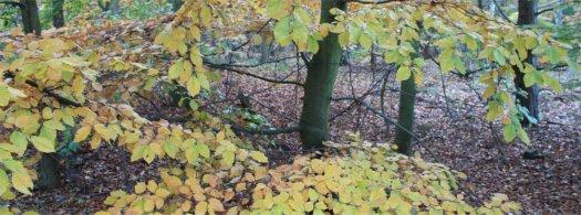 Hösten är här, men vart tog sommaren vägen.|Foto: Gerd Persson