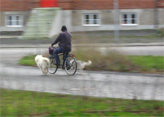 Höjden av lycka. En långtur med cykeln. Kuta på i hunnahimmelen.|Foto: Gerd Persson