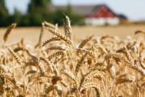 Lantmännen förnyar spannmålsmottagningar i Skåne