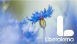 Liberalernas förslag för att vända BB-kaoset